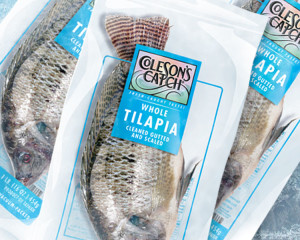 Tilapia Frosted