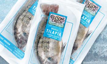 Tilapia-frost